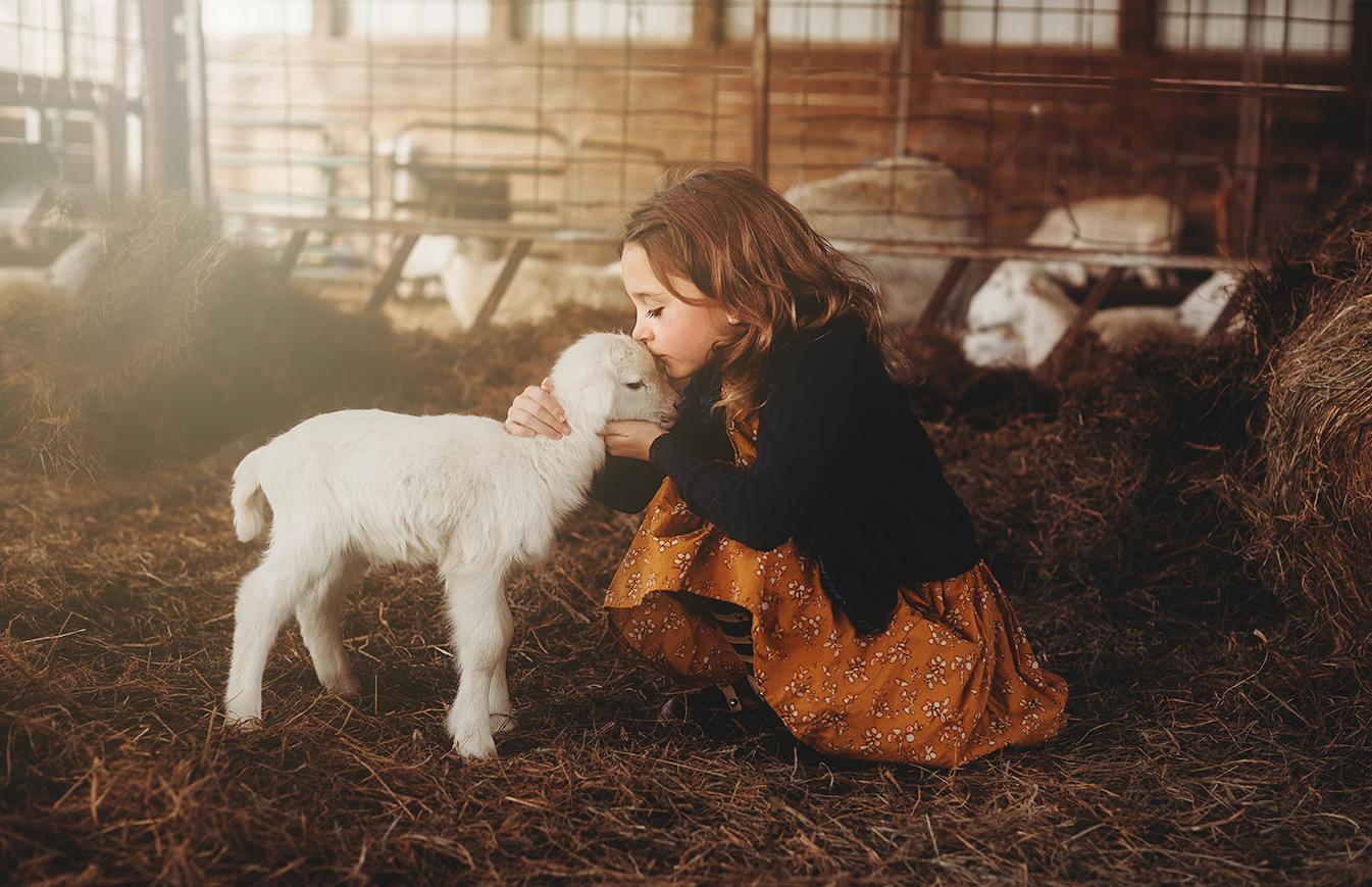 lamb 11