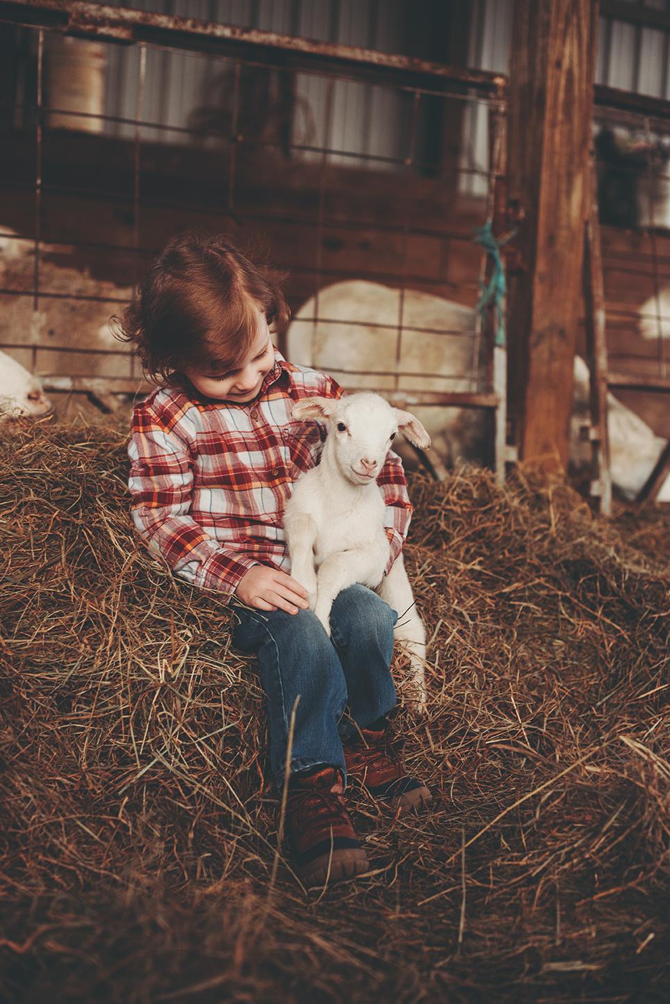 lamb12