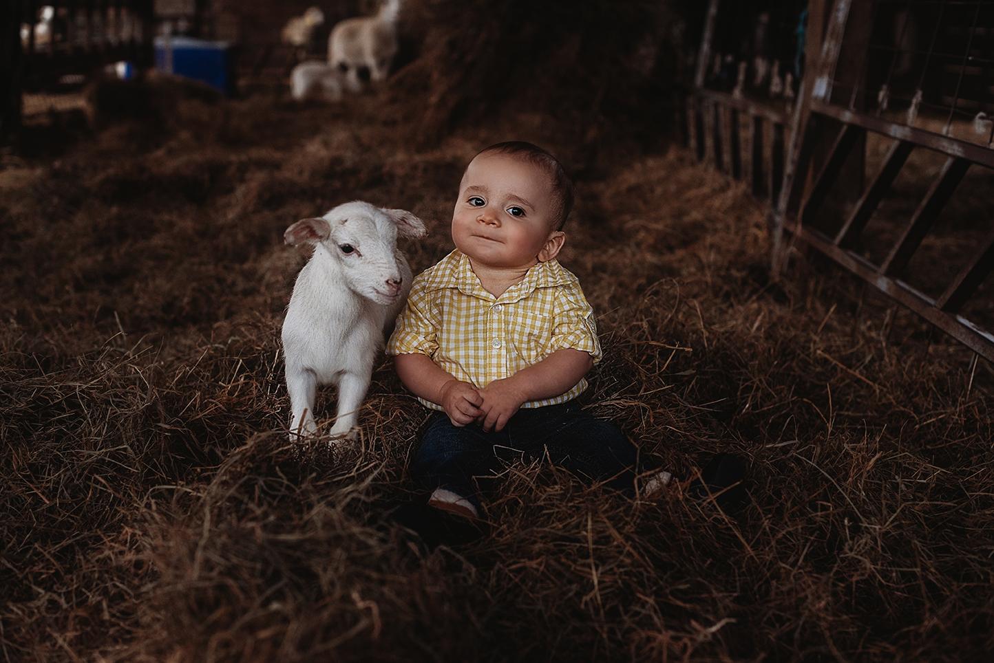 lamb13