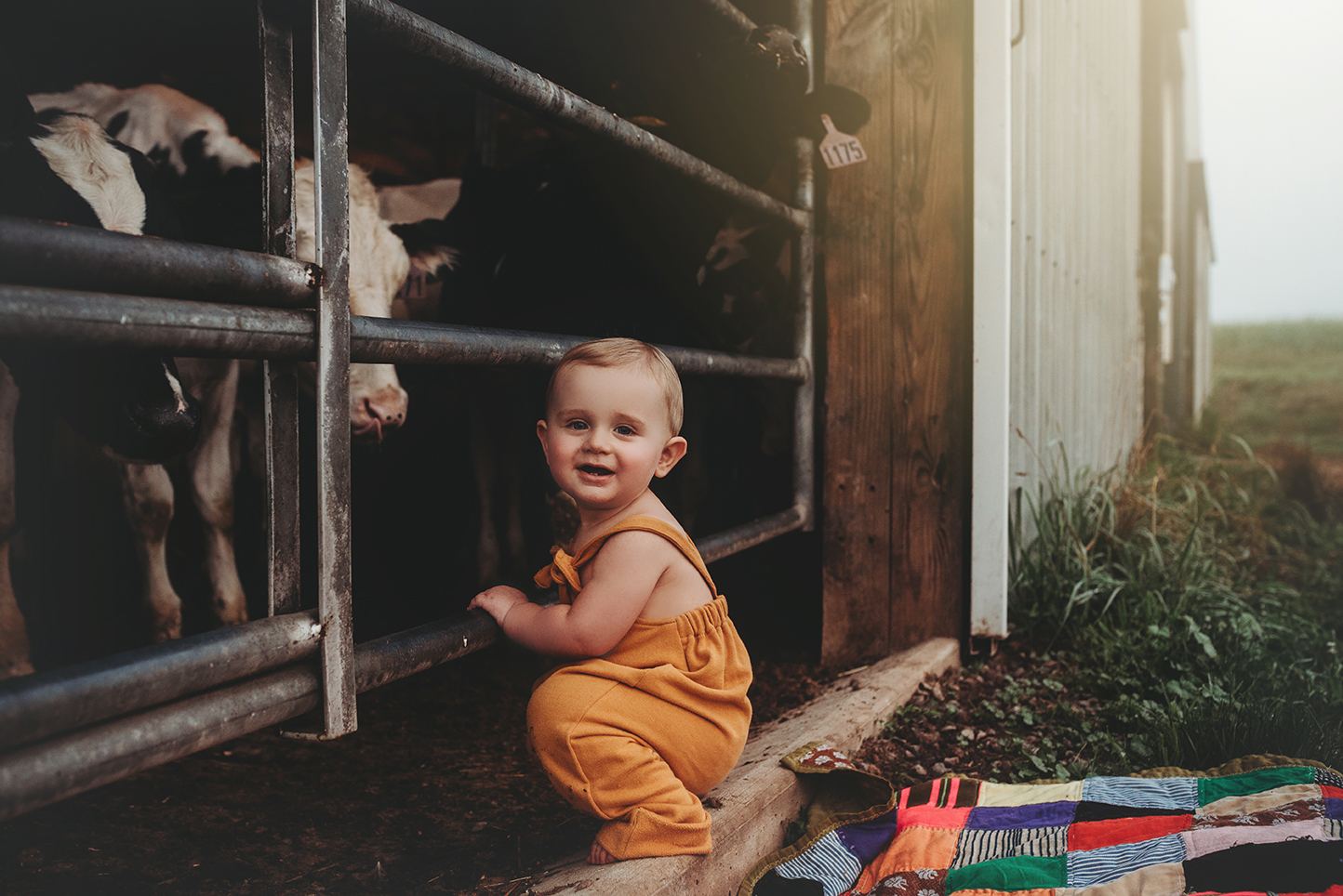 Tripp is one at the farm